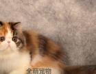 《波斯猫》幼猫纯种波斯猫宠物猫波斯猫宠物猫波斯猫