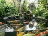锦鲤鱼池!景观鱼池!现货定做地缸!过滤净水系统施工改造