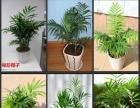 广州花卉绿植租摆花草植物出租花木租赁