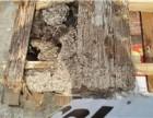 观澜白蚁预防公司-观澜高尔夫白蚁预防 首选澳华白蚁
