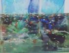孔雀鱼连缸出售