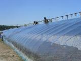 优惠的农膜就在亚龙塑料 青州农膜厂家