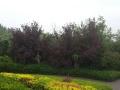 淄博公墓齐孝陵