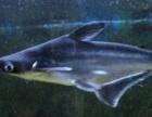 东营森森水族观赏鱼促销,十间鹦鹉地图蓝鲨双线海豚猫