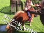 浙江羊驼租赁上海设特兰矮马租赁江苏孔雀租赁浙江袋鼠