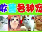 长期大量收购各种宠物猫