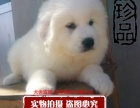 可爱的大白熊 冷酷的外表 温柔的内心较忠诚的家庭