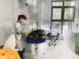 重庆宠物医院提供宠物洗澡,宠物美容,宠物医疗服务