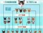贵宝宝宠物医院猫犬节育公的300起
