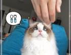 北京实体猫舍 注册猫业 出售布偶猫 售后齐全 让您购宠无忧