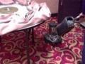 地毯深度清洗 日常保养 开缝维修 免费杀菌除螨