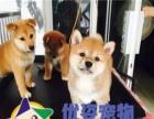 年末狂欢 狗舍88折出售各种名犬 上门送宠物用品