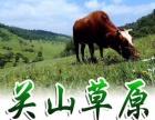 关山草原,风筝节一日游