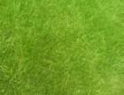 提供婚礼专用草坪,婚礼场地草坪