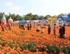 春暖花开,松山湖梦幻百花洲,周边赏花好去处,门票优惠啦