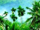 椰林之旅-三亚 激情海岛风情游(特惠团)