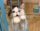加菲猫 5000元