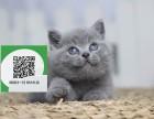 徐州哪里开猫舍卖蓝猫 去哪里可以买得到纯种蓝猫