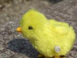 毛绒上链小鸡 发条小鸡 地摊好货源批发价 跳跳鸡星光玩具厂家