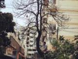 园林抢险 树木修剪移植 清理障碍树欢迎来电