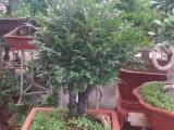 北京园林绿化养护花卉绿植租赁销售