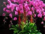 写字楼植物租赁,写字楼植物租摆,花卉出租出售