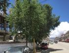 日喀则市山东南路 商业街卖场 566平米