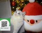 徐州哪里有布偶猫出售 徐州布偶猫价格 徐州宠物狗出售信息