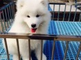 潮州哪里有宠物狗出售 潮州哪里可以领养小狗