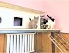 九棵树宠物寄养 长期提供猫猫狗狗寄养服务 房间有暖气可接送