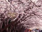 韩国首尔五天半自由行游!赏樱花!惠州到韩国特价旅游团 仅2099