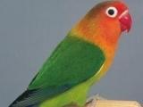 出售各种观赏鸟即周边配套
