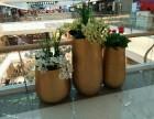 杭州植物租赁,花卉租摆,办公室植物设计