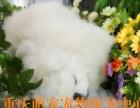 重庆价格的宠物火化猫猫狗狗火化服务公司宠物殡葬宠物后事