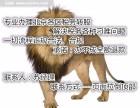 专项审批北京石景山美容公司营业执照手续