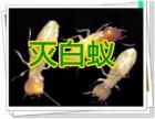 嘉兴灭白蚁,海宁灭白蚁,海盐灭白蚁,嘉善灭白蚁哪家便宜
