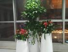 深圳绿植租摆 深圳租花 花卉租赁 高端绿植 特惠中