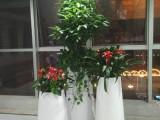 专业办公室绿植租摆,园林绿化,室内景观设计