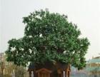 景观仿生制作水泥假山卡通门面幼儿园生态园建设