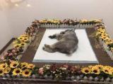 杭州寵物火化,我們是做寵物殯葬的公司