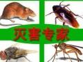 中国鼠害防治协会会员单位城市猎人