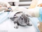 东莞石排24小时宠物医院收费便宜