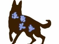 幽灵犬是什么犬?多少钱一只,马犬幼犬价格,马犬训练方法