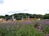 松山湖花海赏花生态园春游踏青一日游野炊太美了