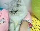 大胖猫大胖猫大胖猫