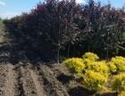 园林绿化园艺工程施工设计及养护