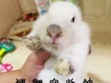 猪猫宠物馆,兔子,垂耳兔,猫猫兔,道奇兔,侏儒兔
