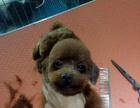 招宠物美容师店在海曙区