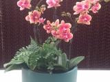 苏州吴江绿植租摆绿化养护办公室植物租赁
