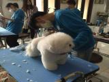宠物美容师考试哪些,优质的产品与服务